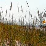 """Ocean Beach Grasses & Yellow Warning Flag"" by KsWorldArt"