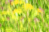 Wildweed Abstract