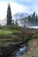 Mount Rainier Snow Melt