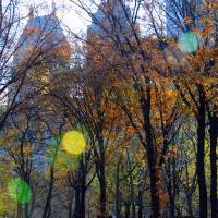 Central Park In Autumn Art Prints & Posters by Gareth Thomas