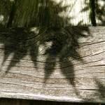 """Beauty of shadows"" by GuardianAngel68"