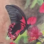 """Butterfly"" by CaraJ"