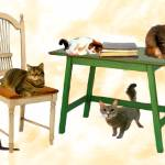 """5 Cats, a Chair and a Table"" by SueMolyneaux"