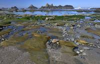 Seal Rock Beach at low tide