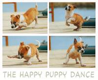 the happy puppy dance