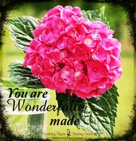 WONDERFULLY MADE - HYDRANGEA
