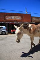 Route 66 - Oatman Arizona