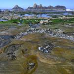 """Seal Rock Beach tidepoolers"" by JohnChaoPhoto"