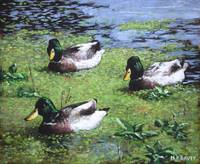 three mallard ducks in pond