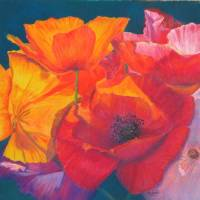Poppy Medley Painting Art Prints & Posters by Marion Hedger