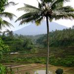 """Mount Agung with the Coconut Tree"" by eviirons"