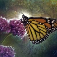 Springtime Butterfly Art Prints & Posters by José Rodriguez