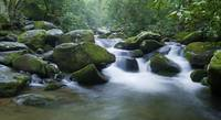 Smoky Mountain Stream 2