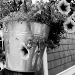"""flowers in a bucket"" by rathompson"