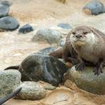 """Otter"" by argaito"