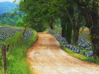 Bluebonnet_Road