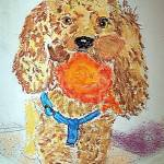 """07222012 Apricot Toy Poodle"" by garlandoldham"