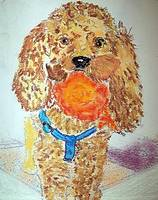 07222012 Apricot Toy Poodle