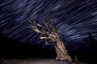 Storybook Tree Star Trails