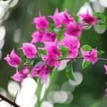 """Tree blossoms"" by ekewilson"