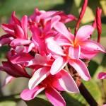 """""""Pink Tropical plant"""" by ekewilson"""