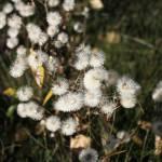 """""""wildflower"""" by ekewilson"""