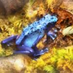 """Blue Dart Frog"" by susansartgallery"