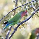 """Love Bird"" by ENKPHOTOGRAPHY"