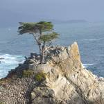 """The infamous Naked Cypress, Monterey, CA"" by Nielswright"