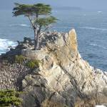 """The infamous Naked Cypress 3, Monterey, CA"" by Nielswright"