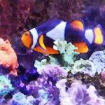 """Clownfish and Coral"" by susansartgallery"