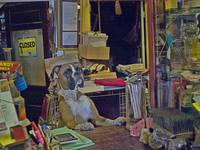 the cashier at Biggar Antiques Inc