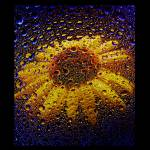 """Sunflower Galaxy"" by timdressler"
