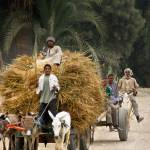 """""""Egyptian Farmers"""" by mjphoto-graphics"""