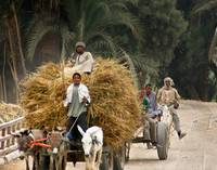 Egyptian Farmers