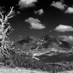"""""""Old Tree and Broken Top"""" by aphimages"""