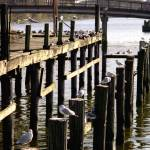 """Piers on Pontchartrain"" by JCTPhoto"