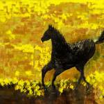 """Black Stallion"" by artbyshesh"