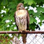 """""""Hawk"""" by SnapitNow"""