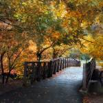 """""""Autumn Overpass"""" by JessicaJenney"""