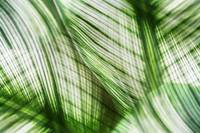 Nature Leaves Abstract in Green