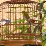 """""""bird market"""" by phototes"""