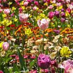 """wild garden"" by phototes"