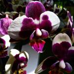 """orchids"" by phototes"