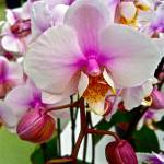 """orchids 3"" by phototes"