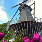 """windmill4"" by phototes"