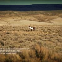 Sand Wash Basin ~ The Land by Jim Westin