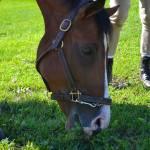 """horses 4 001"" by BlueSkies"