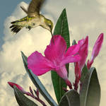 """Pink Oleander and Hummingbird"" by spadecaller"