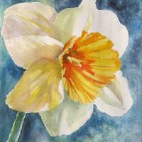 """Spring Jonquil"" by Linda Spollen Haile"